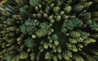ISR : Comment investir durable et responsable